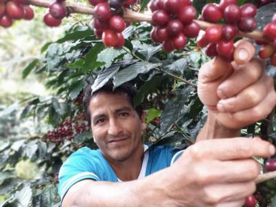 Hoe gaat nu met de koffieboeren in coronatijd?